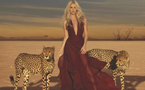 夏奇拉,夏奇拉,歌手,金发,长长的头发,沙漠,石头,猎豹,衣服,天空,风,热