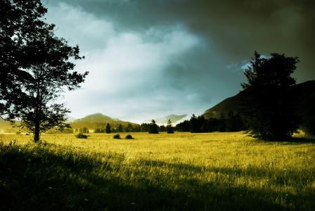 早晨,阳光,草,黎明,树木,山丘