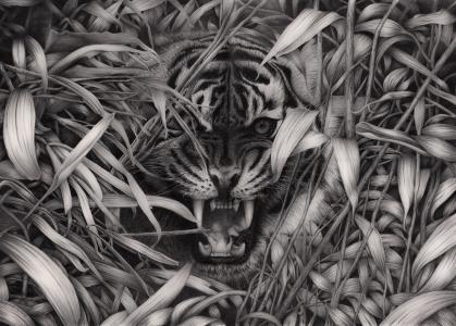 老虎,黑色和白色背景