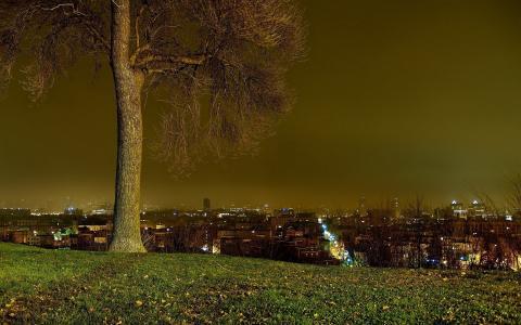 夜晚的城市,绿色的草坪,树的灯