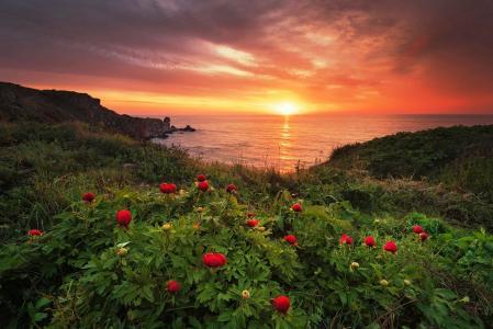 黎明,鲜花,牡丹,野生,水,摄影师里内·杜波夫