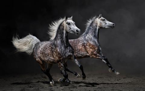 动物,马,跑步