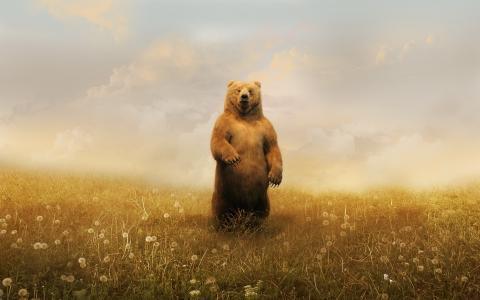 棕色的熊,领域,蒲公英