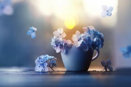 花,花瓣,杯子,绣球花,Ashraful Arefin