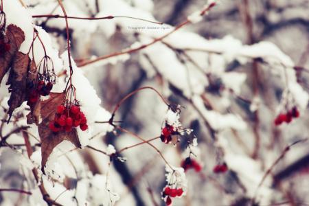 宏,雪,荚,,冬天,性质