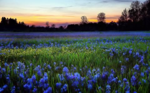晚上,日落,鲜花,美丽