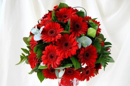 花束,非洲菊,组成,鲜花