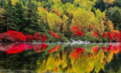 秋天,美丽,水,池塘,森林,油漆,美丽