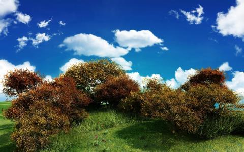 灌木丛,云彩,天空,绿叶