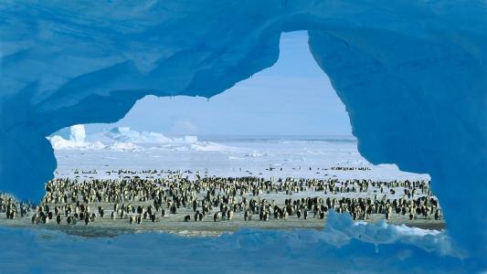 企鹅,稳定,冰,达尔,水平线,冷冻