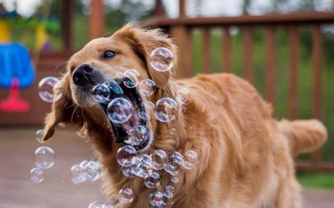 嬉戏,狗,夏天