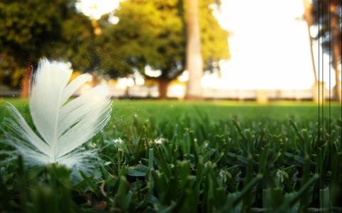 羽毛,草坪,模糊,性质