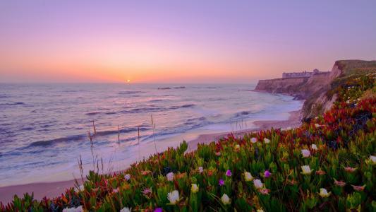 景观,粉红色,日落,岸边,鲜花