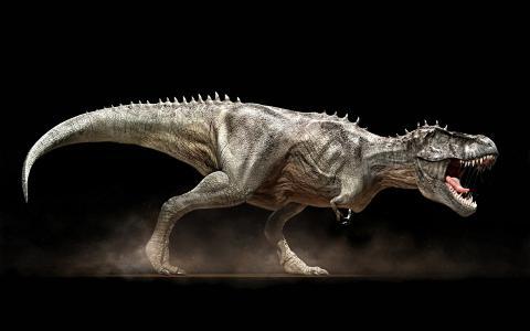 黑色的背景,嘴里,f牙,Trex,恐龙