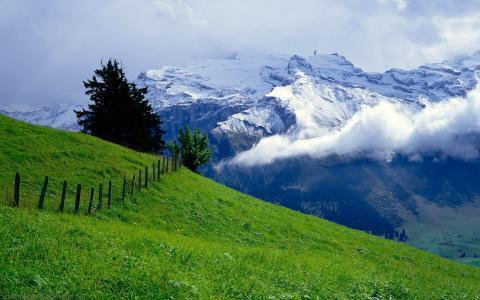 阿尔卑斯山,雪山,阴霾,绿色的草地,围墙