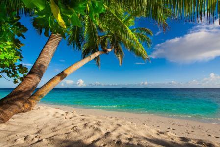 夏天,沙滩,海,岸,天堂,热带,沙,棕榈树,海,海滩,沙滩,沙子,棕榈树