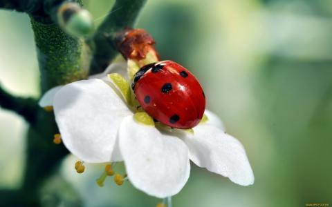 性质,瓢虫