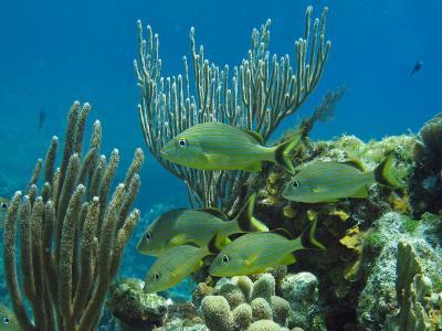 海洋,珊瑚礁,美丽