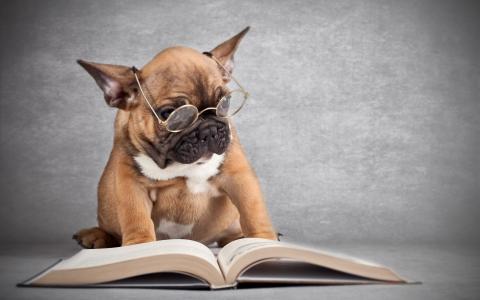 眼镜,狗,书