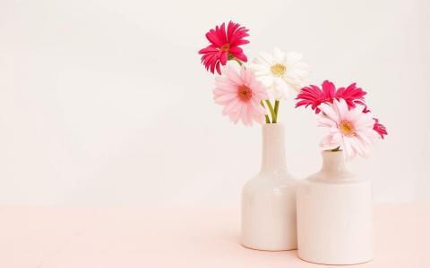 花瓶,非洲菊,光,背景,花束