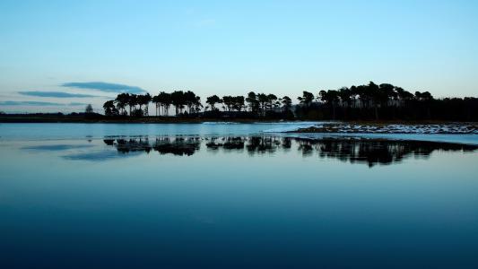 清晨,靠湖边,树木