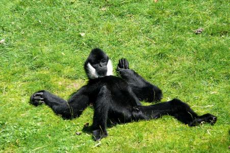 猴子,照片,积极