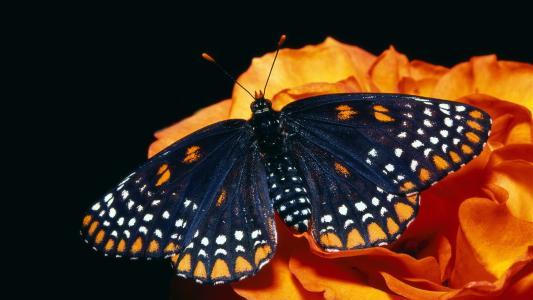蝴蝶,花卉,背景,美丽