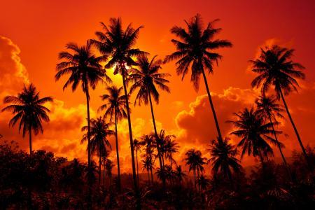 夏天,棕榈树,性质