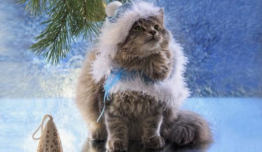 雪少女,猫,pelerinka,松枝,玩具,新年贺卡,伊琳娜Prikhodko