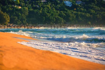 海洋,波浪,沙滩,沙滩,树木