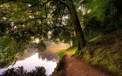 河,树,青苔,路径,性质
