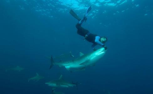 极端,照片,水下,鲨鱼