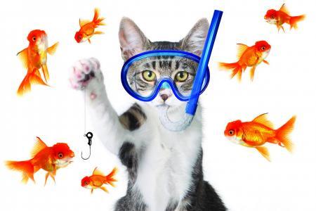 猫,面具,双鱼座,动物
